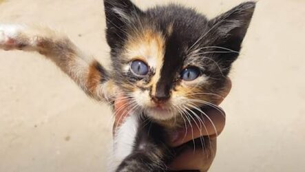 История о кошке со своенравным характером