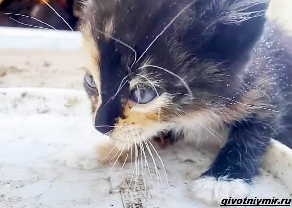 История-о-кошке-со-своенравным-характером-2