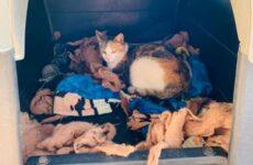 История о добром питбуле, который уступил свой домик кошке