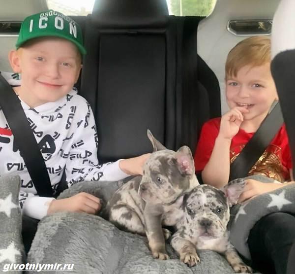 История-о-двух-собаках-которых-сложно-отличить-от-диванной-обивки-3