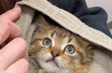 История о кошке, которая прилипла лапками к металлической части шины