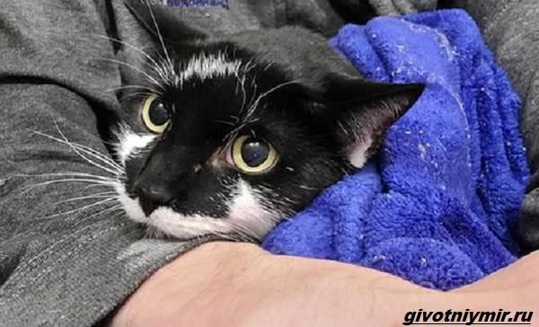 История-о-кошке-которая-пряталась-в-здании-аэропорта-1