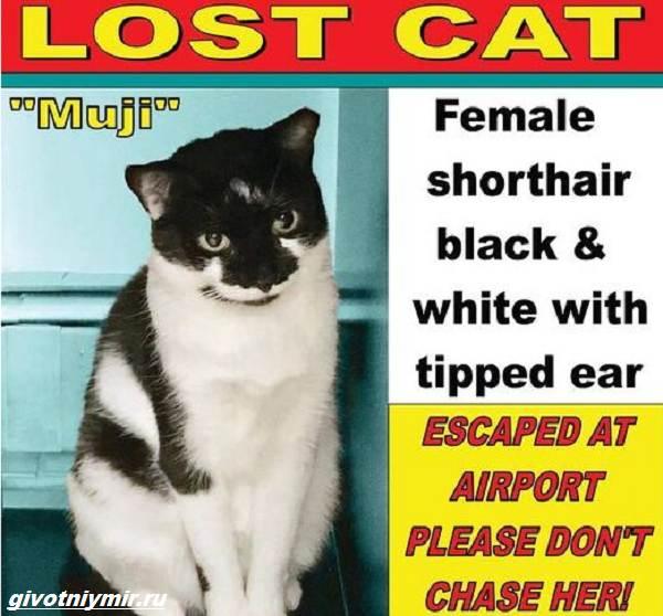 История-о-кошке-которая-пряталась-в-здании-аэропорта-3