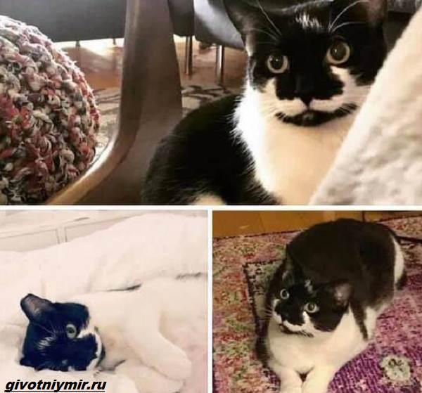 История-о-кошке-которая-пряталась-в-здании-аэропорта-4