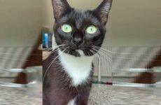 История о кошке, которая украла мясо и поела его на кровати