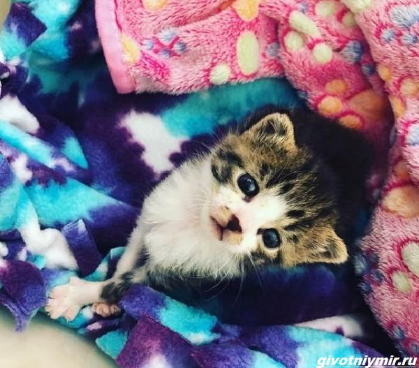 История-о-коте-который-помог-своей-хозяйке-выиграть-приз-в-50-тысяч-долларов-3