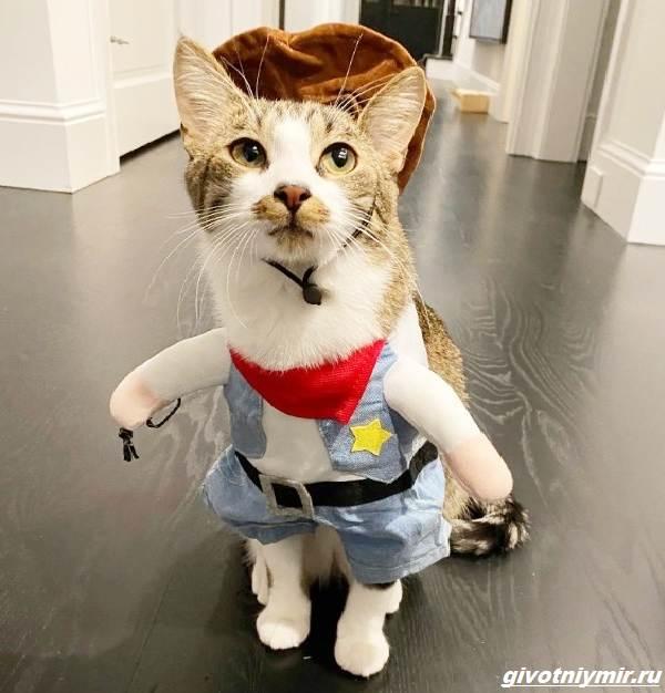 История-о-коте-который-помог-своей-хозяйке-выиграть-приз-в-50-тысяч-долларов-5