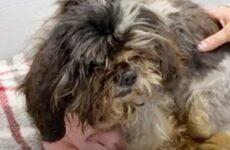 История о лохматой собаке, которая превратилась в красивого питомца