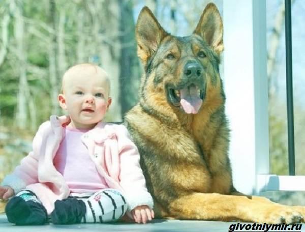История-о-полицейской-собаке-которая-стала-няней-для-маленькой-девочки-1