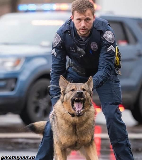 История-о-полицейской-собаке-которая-стала-няней-для-маленькой-девочки-2