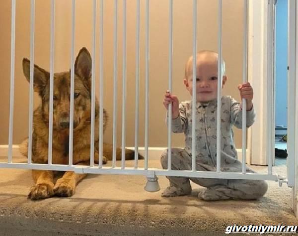 История-о-полицейской-собаке-которая-стала-няней-для-маленькой-девочки-3