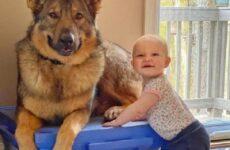 История о полицейской собаке, которая стала няней для маленькой девочки
