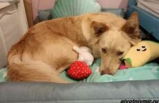 История о собаке и целой коробке подаренных игрушек