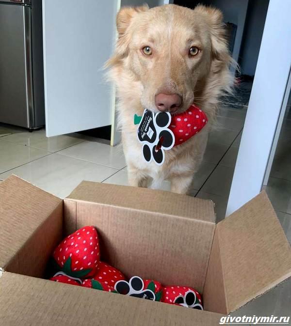 История-о-собаке-и-целой-коробке-подаренных-игрушек-4