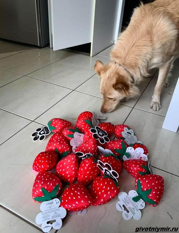 История-о-собаке-и-целой-коробке-подаренных-игрушек-5