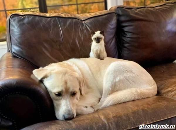 История-о-собаке-которая-изменила-характер-котёнка-1