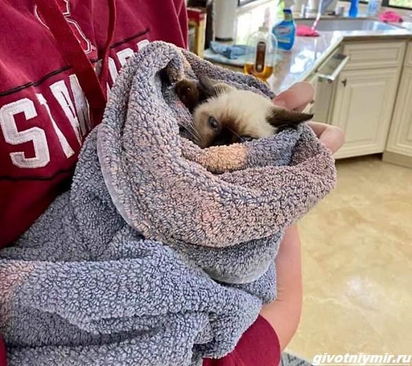 История-о-собаке-которая-изменила-характер-котёнка-2