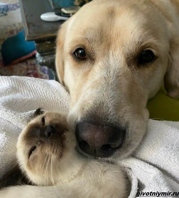 История-о-собаке-которая-изменила-характер-котёнка-4