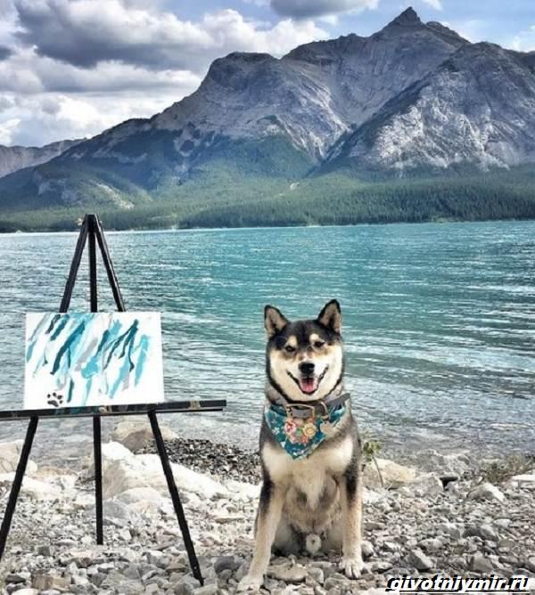 История-о-собаке-которая-рисует-картины-и-зарабатывает-деньги-2
