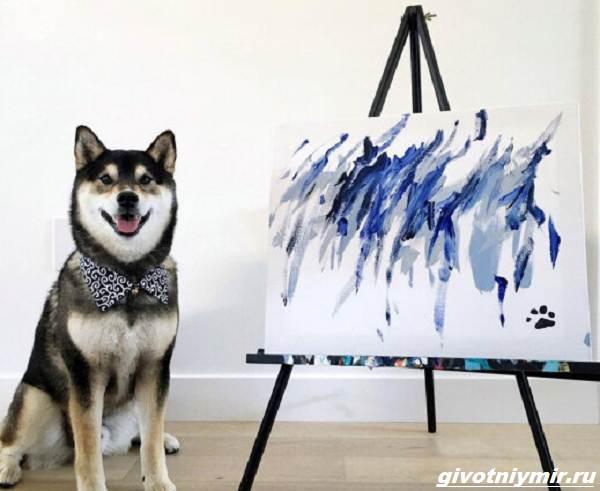 История-о-собаке-которая-рисует-картины-и-зарабатывает-деньги-3