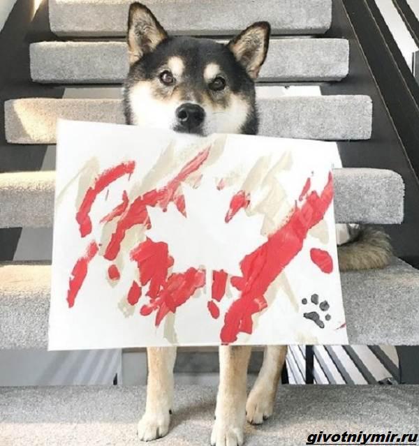 История-о-собаке-которая-рисует-картины-и-зарабатывает-деньги-4