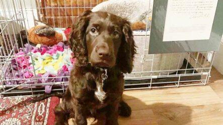 История о собаке, которая сама сделала покупку на eBay