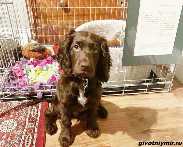 История-о-собаке-которая-сама сделала-покупку-на-eBay-1