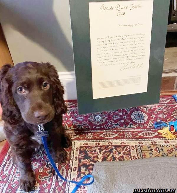 История-о-собаке-которая-сама сделала-покупку-на-eBay-3