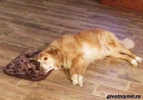 История-о-собаке-которая-сама сделала-покупку-на-eBay-5