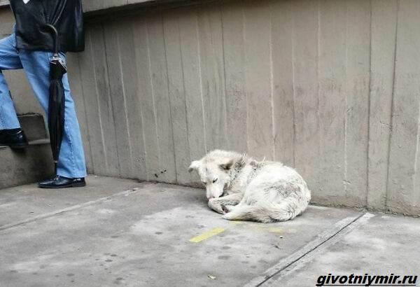 История-о-собаке-которая-выскочила-на-футбольное-поле-и-стала-знаменитой-5