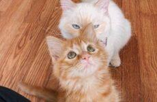 История об одиноком рыжем котёнке