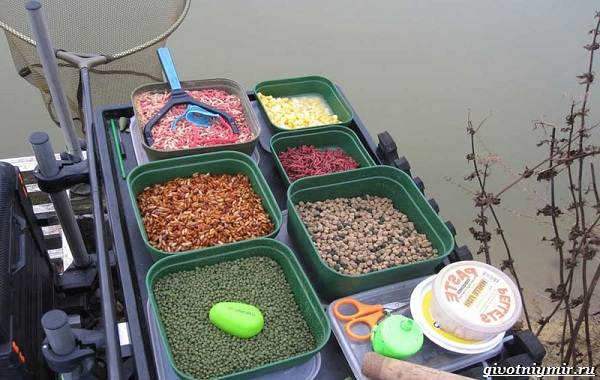 Наживки-для-рыбалки-их-виды-и-особенности-1