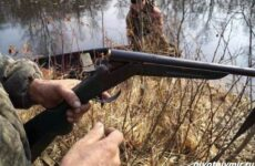Охота на бобра и её особенности