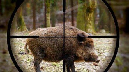 Охота на кабана разными способами