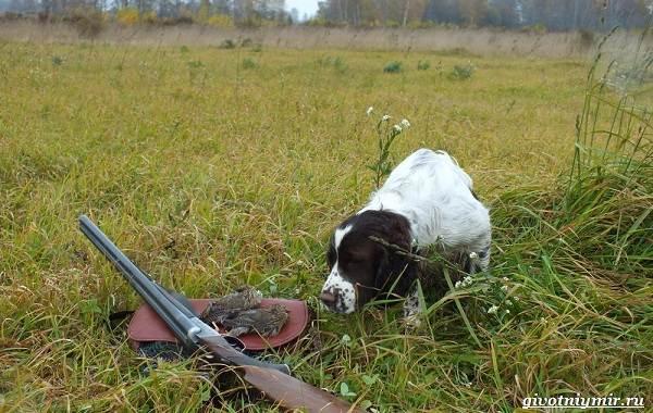Охота-на-куропатку-и-её-особенности-11