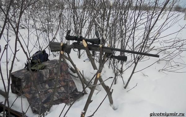 Охота-на-куропатку-и-её-особенности-14