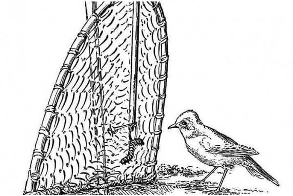 Охота-на-куропатку-и-её-особенности-15