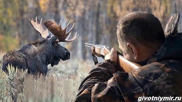 Охота-на-лося-разными-способами-6