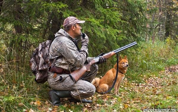 Охота-на-рябчика-и-её-особенности-8
