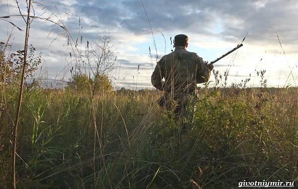 Охота-на-рябчика-и-её-особенности-9