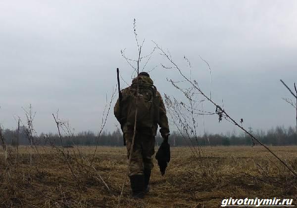 Охота-на-тетерева-и-её-особенности-3