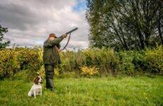 Охота на тетерева и её особенности