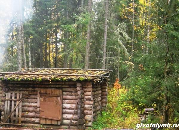 Охота-в-Республике-Коми-и-её-особенности-1