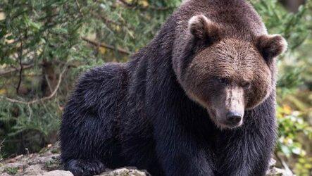 Охота в Республике Коми и её особенности