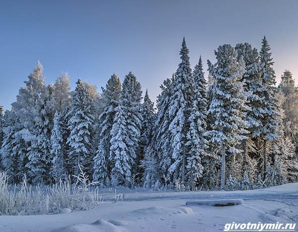 Охота-в-Сибири-и-её-особенности-3