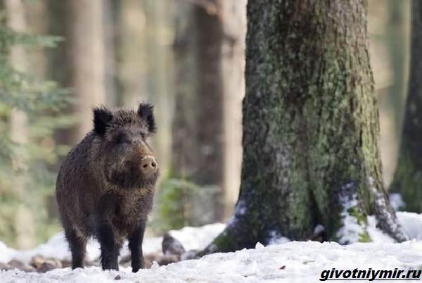 Охота-в-Сибири-и-её-особенности-4