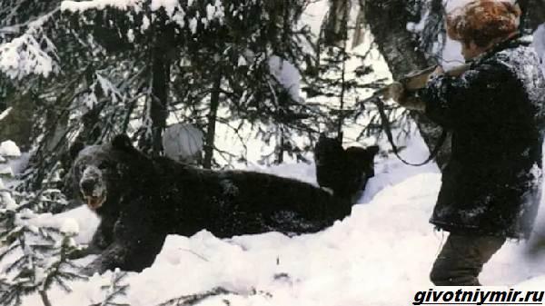 Охота-в-Сибири-и-её-особенности-5