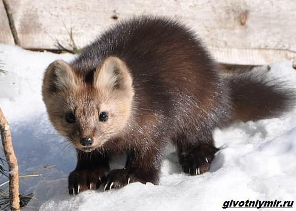 Охота-в-Сибири-и-её-особенности-7