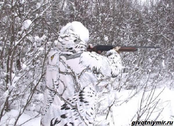 Охота-в-Сибири-и-её-особенности-8