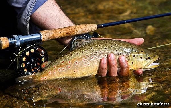 Рыбалка-на-форель-Где-когда-и-на-что-ловить-1